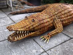 Willow Crocodile