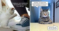 Huzzah! It's the moment we've all been waiting for -- Cheezburger's classic LOLCats! #cats #funnycats #catmemes #animalmemes #lolcats #funny Funny Cats, Funny Animals, Cat Toilet, Lots Of Cats, Meme Pictures, Buy A Cat, Funny Relatable Memes, Trending Memes, Animal Memes