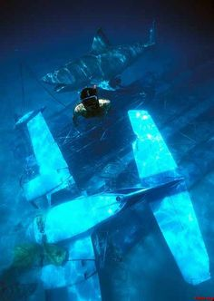The submerged shots Vengeance and the seaplane are so creepy! Jaws Film, Jaws 4, Jaws Movie, Space Knight, Animal Attack, Horror Icons, Fish Art, Weird Facts, Horror Movies