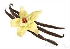 Obrázek z Recept - Domácí vanilkový cukr - poctivý