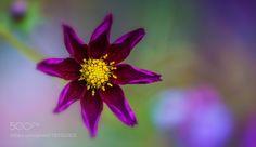 sweet purple by fgombert. @go4fotos