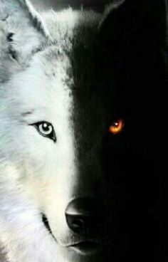Read Personajes from the story THE WOLF by with reads. Anime Wolf, Artwork Lobo, Wolf Artwork, Mystical Animals, Mythical Creatures Art, Wolf Photos, Wolf Pictures, Wolf Love, Wolf Background
