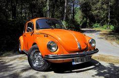 my orange beetle