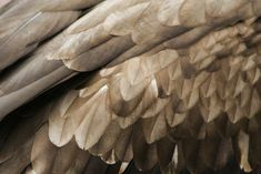 brown angel wings - Google Search