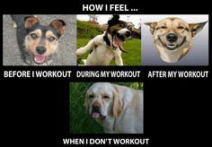Funny Fitness Pictures. Dog Feelings