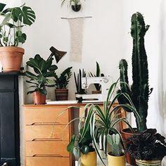 Sewing the ribbon of plant love  :@thetribeandus #urbanjunglebloggers