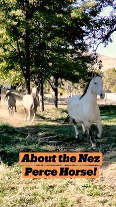 Rare Horses, Funny Horses, Wild Horses, Most Beautiful Horses, All The Pretty Horses, Animals Beautiful, Western Horse Riding, Farm Animals, Cute Animals