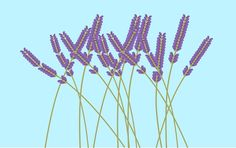 Lavender - Scorpion Repellent. Plant some lavender around your property and see no more scorpions. Lavender grows easily in Arizona. Looks nice and works great! Also use some organic lavender oil inside the house. I NEVER see scorpions anymore! Enjoy! #Lavender #Scorpions
