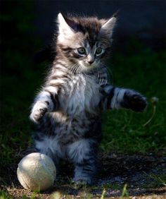 Chat footballeur
