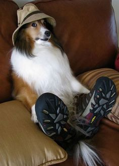 20 Animals Wearing Shoes - BuzzFeed Mobile