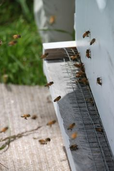 Thinking of bees? A newbee chronicles her adventure from day 1.  Easy to understand, informative posts.