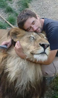 Michal Prasek took this awesome photo that has animal, lion, mammal, wildlife in it Mammals, Lions, Wildlife, Lion