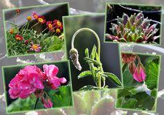 Plants available at the Farmers Market in Ballan. (Victoria, Australia)