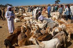 Goat market, Asmara, Eritrea