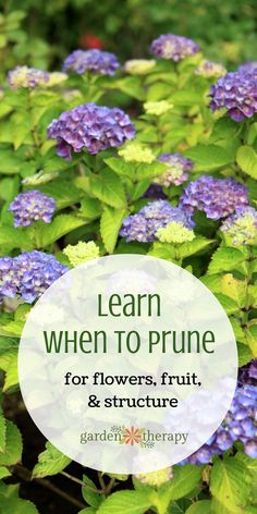 Learning when to prune can be confusing when there are different rules for many different plants and even differing rules that vary by cultivar This guide takes away all. Pruning Plants, How Plants Grow, Garden Plants, Flowering Plants, Gardening For Beginners, Gardening Tips, Outdoor Plants, Outdoor Gardens, Different Plants
