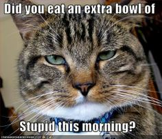 funny cat criticizing me!? ouch!