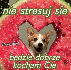 Cute Sentences, Happy Memes, Cute Love Memes, Nyan Cat, Mood Pics, Wholesome Memes, Wtf Funny, Reaction Pictures, Cute Cats