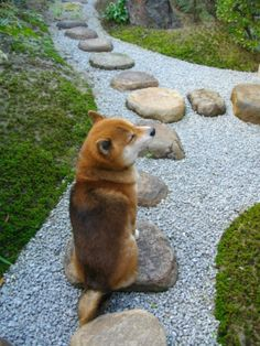 Dog sitting on rock!
