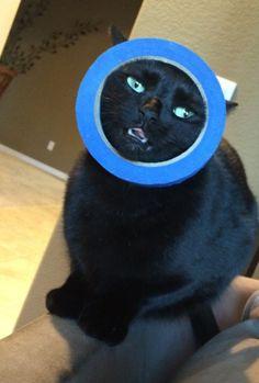 22 gatos que se quedaron bien atrapados por culpa de su curiosidad
