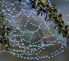 """dragyoudownwithme:    """"Web Site"""" by relayer51"""