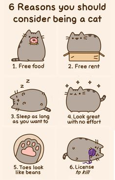 """Six Reasons to be a cat :"""")"""
