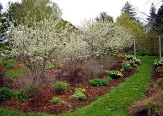 Image result for landscape with serviceberry