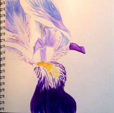 Sketch with Tombow Markers, Iris, by Liz Carlson Arts and Illustration, 2015