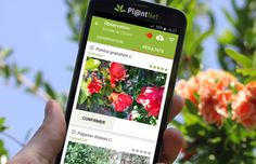 follow-the-colours-aplicativo-identifica-plantas-plantnet-03