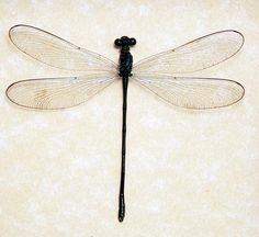 Damselfly - Arron's tattoo