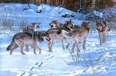 5 Images de Loups - Frawsy