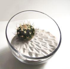 zen garden with cacti