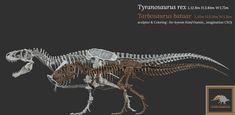 Is Tyrannosaurus now considered the largest theropod again? - Quora Dinosaur Skeleton, Figure Drawing Reference, Tyrannosaurus Rex, Skeletons, Artwork, Work Of Art, Auguste Rodin Artwork, Artworks, Illustrators