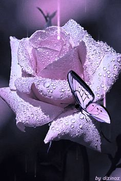 Beautiful butterfly animation on a lavender rose-gif Beautiful Flowers Wallpapers, Beautiful Rose Flowers, Beautiful Gif, Pretty Wallpapers, Beautiful Butterflies, Love Flowers, Purple Flowers, Beautiful Pictures, Butterfly Gif