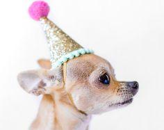Dog Birthday Party Hat || Animal Birthday Party Hat || Pet Party Hat || Pet Birthday || Pet Kitty Cat Puppy Pig Party Hat || Dog Tag