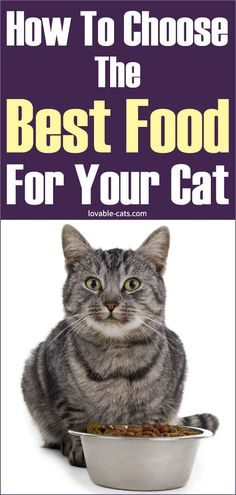 How To Choose The Best Food For Your Cat Zoo Animals, Funny Animals, Cute Animals, Pet Dogs, Dog Cat, Pets, Beautiful Cats, Animals Beautiful, Cat Toilet Training