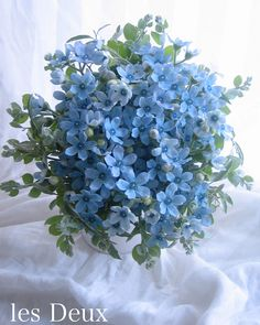 Shane brings Beth her a bouquet of forget me nots to their first official date. Flowers For You, My Flower, Beautiful Flowers, Simply Beautiful, Light Blue Aesthetic, Flower Aesthetic, Blue Wedding Flowers, Wedding Bouquets, Blue Flower Arrangements