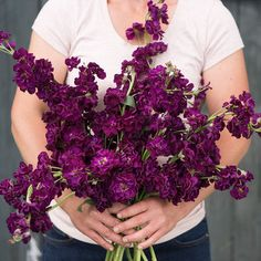 I love this color of these purple snapdragons
