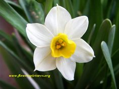 """narcissus - Google Search - """"December's birth flower is the narcissus which embodies the idea that you want your beloved to stay just the way they are."""" http://www.almanac.com/content/birth-month-flowers-and-their-meanings"""