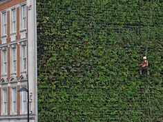 The Guardian. Aug. 2015. London's largest living wall is unveiled at the Rubens at the Palace Hotel, Victoria