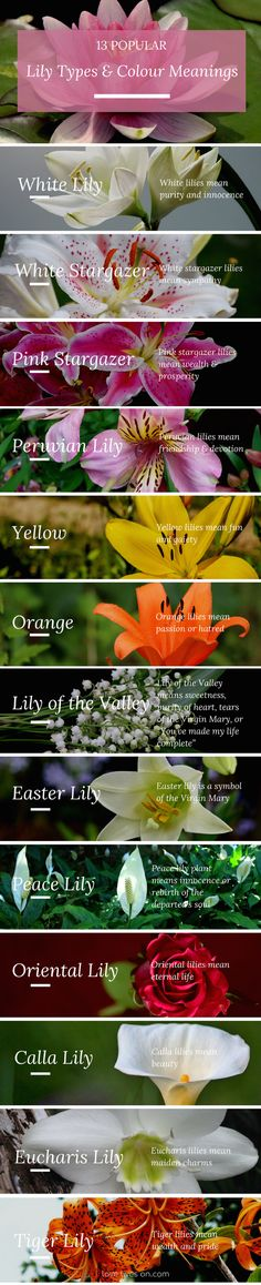 Infographic: 13 Popular Lily Types & Colour Meanings. Learn how different lilies convey different emotions & create a more meaningful sympathy or funeral arrangement.