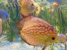 Budapest sea life aqaurium