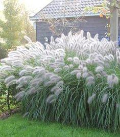 Easy-care perennials for your garden lamp Polished grass Wuift so abundant . White Gardens, Small Gardens, Outdoor Gardens, Garden Lamps, Garden Cottage, Garden Signs, Garden Pool, Garden Grass, My Secret Garden