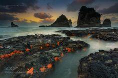 Land Full of Stars by christianlim  new zealand seascape starfish greymouth tasman sea christian lim photography new zealand south islan