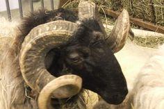 L'élevage Aquitain fait Salon à Paris