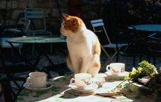 TEA FOR KITTY. . . .a sure success for a lovely morning in the garden. . . . .