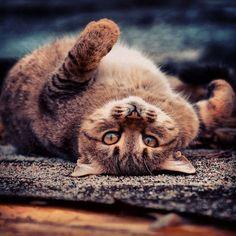 Beautiful Portraits Of Stray Cats Will Make You Want To Run And - Ukrainian photographer sergey polyushko shoots captivating animal portraits