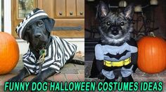 Funny Dog Halloween Costumes Ideas [10+ Hilarious Photos Of Dogs]