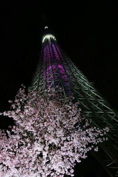 ツリーも桜色 2014.4