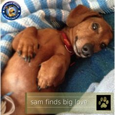GOLD PAW ALERT The Gold Paw is up for Sam!!! This little guy stole everyone's heart here at DRBC and then this past weekend he found his forever home. Congrats Sam!!