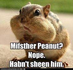 Mr Peanut Who Meme   Slapcaption.com